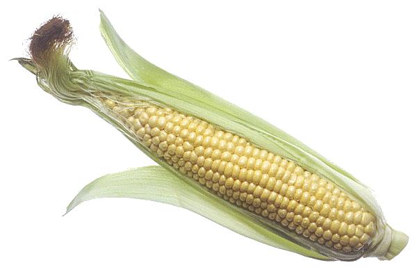 Corn Cob PNG Image