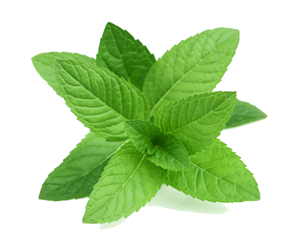Real Leaves Transparent PNG
