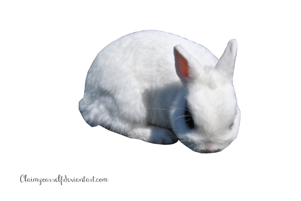 White Rabbit PNG Clipart