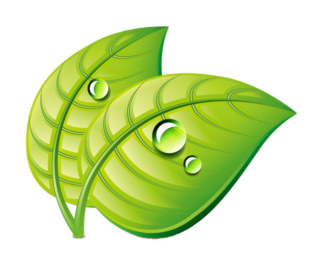 Leaf Water Dew Drop PNG Image