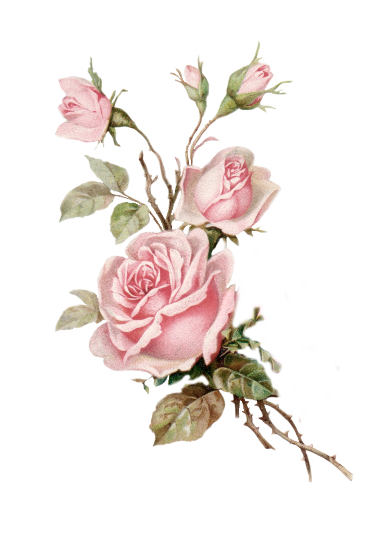 Spring Pink Rose Flower Bunch PNG Image