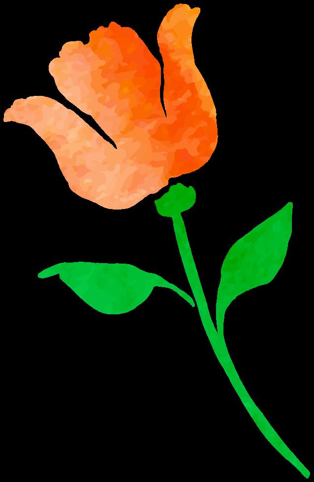 Watercolor Flower Transparent PNG