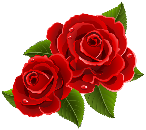 Colorful Rose Flower Transparent PNG
