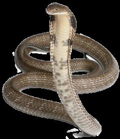 Cobra Snake PNG Pic