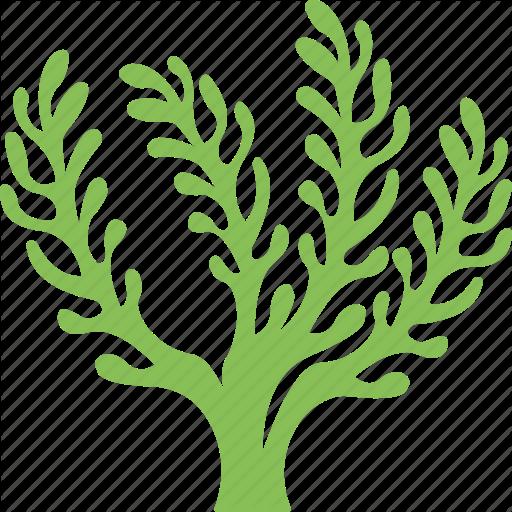Algae PNG Image