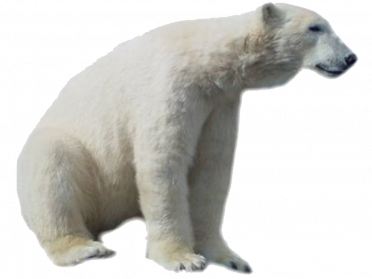 Polar Bear PNG HD