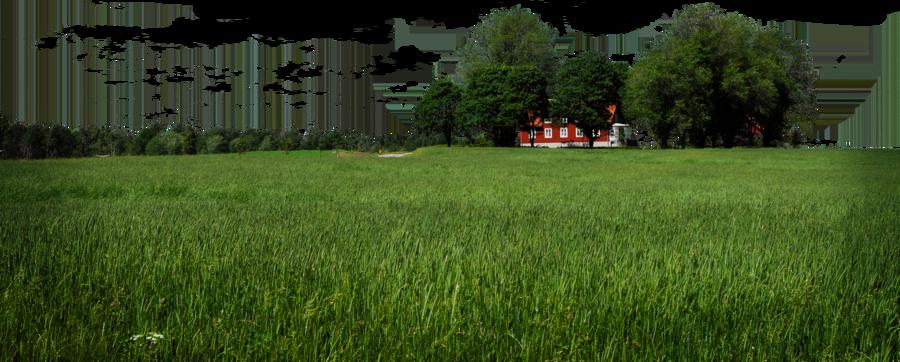 Landscape PNG Image
