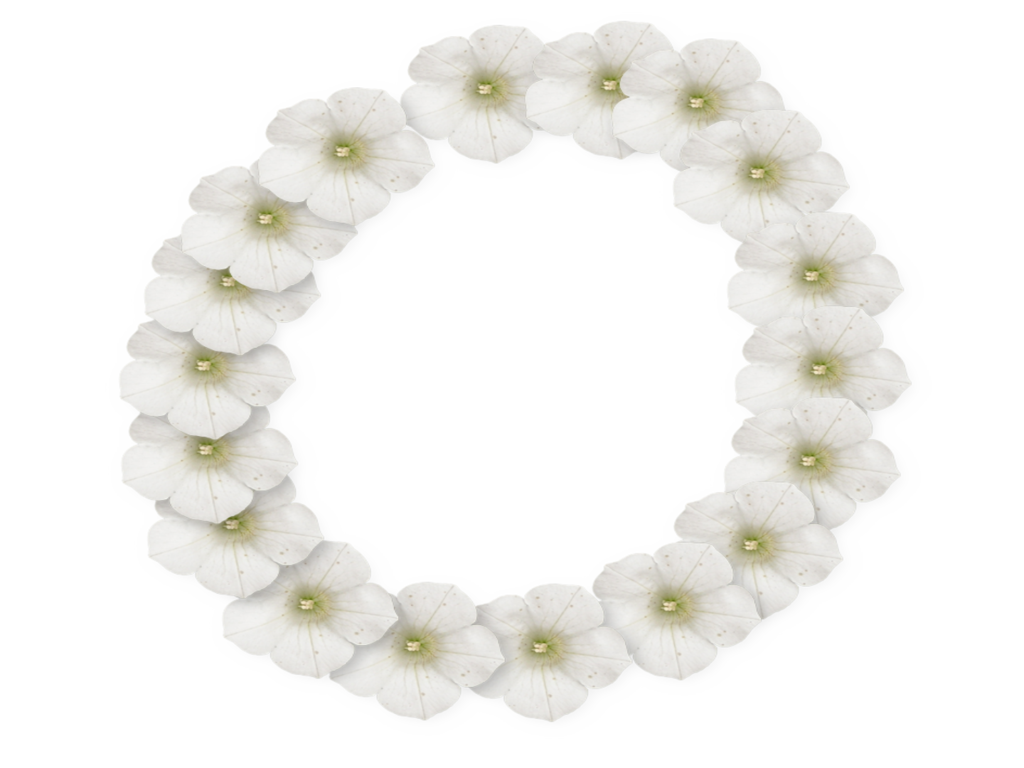 White Flower Frame PNG Photo