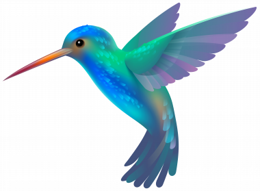 Hummingbird Background PNG