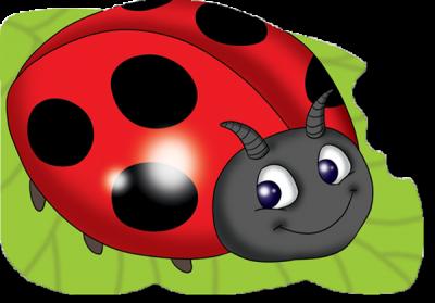 Ladybird PNG HD