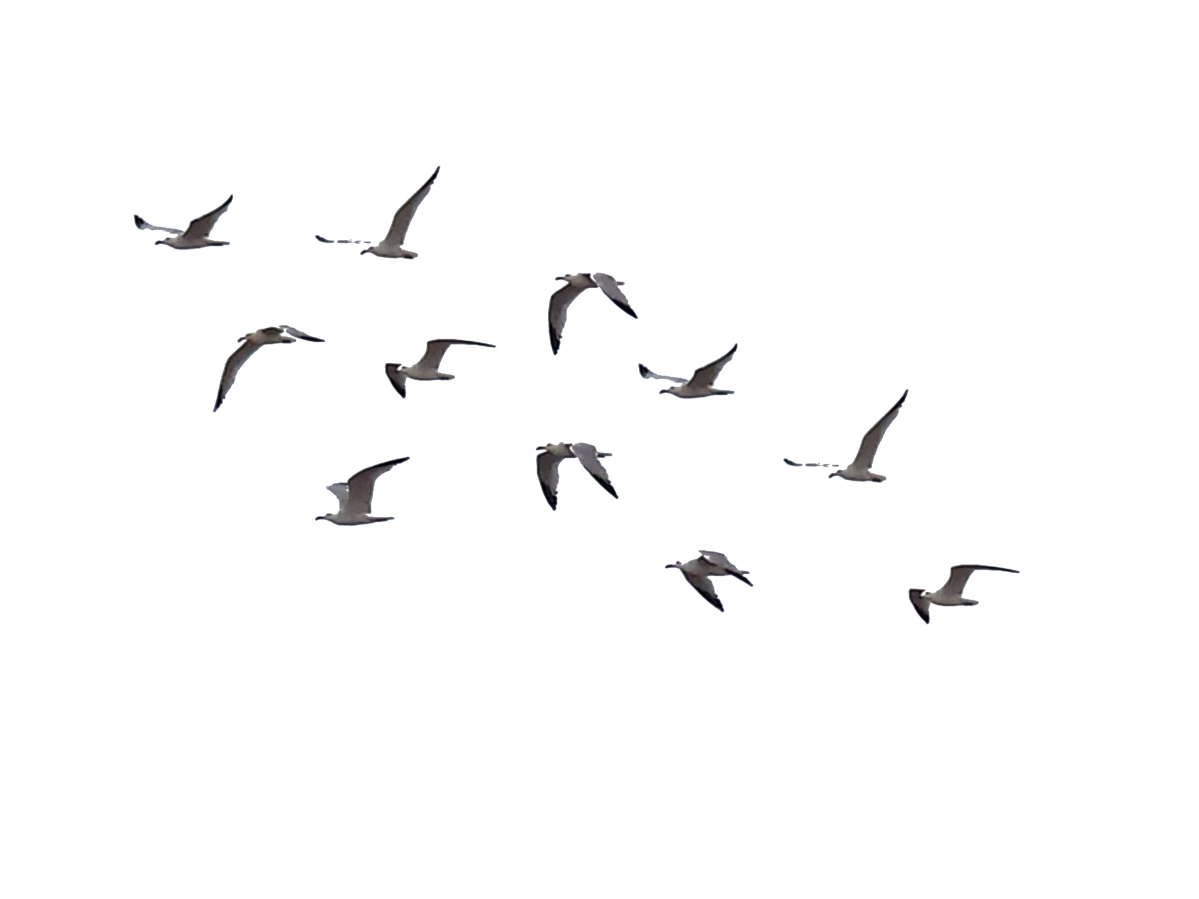 Ocean Birds PNG Transparent Image
