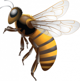 Bee PNG Photo
